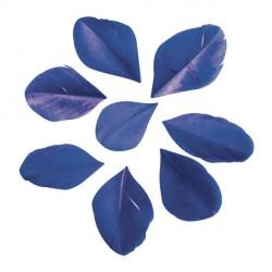 36 Plumes coupées - bleu foncé - 5 à 6 cm