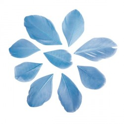 36 Plumes coupées - bleu turquoise - 5 à 6 cm