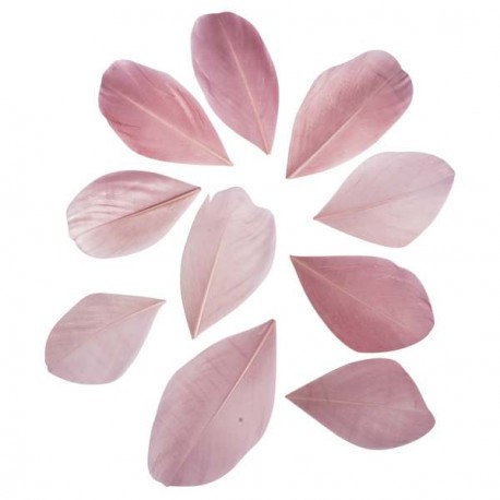 36 Plumes coupées - rose - 5 à 6 cm