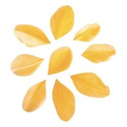 36 Plumes coupées - jaune - 5 à 6 cm