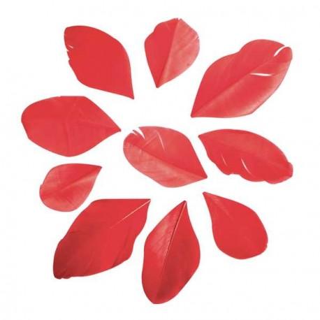 36 Plumes coupées - rouge - 5 à 6 cm