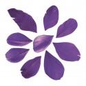36 Plumes coupées - violet - 5 à 6 cm