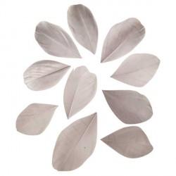 36 Plumes coupées - gris - 5 à 6 cm